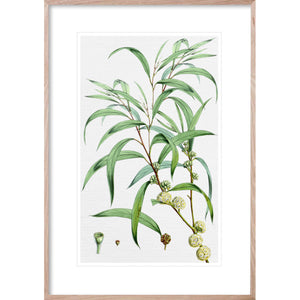 SUMMER BLOOM 1 Classic country and Hampton's style botanical wall art