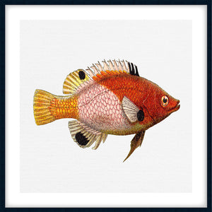 TROPICAL FISH COLLECTION #5 | Framed giclee, fine art print | Black Frame
