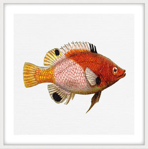 TROPICAL FISH COLLECTION #5 | Framed giclee, fine art print | Matt White Frame