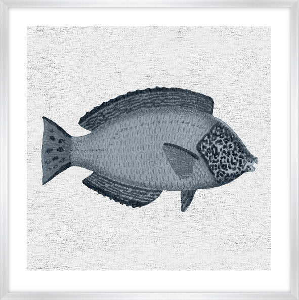 TROPICAL FISH COLLECTION #2 * Contemporary hand painted artwork, fine art print