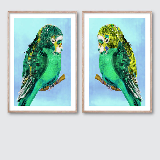 Green Budgie #1 & #2 Pair