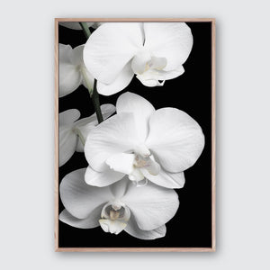 Orchid Bliss #2 Canvas Art | Photographic floral interior artwork
