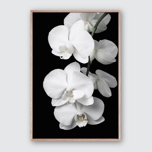 Orchid Bliss #1 Canvas