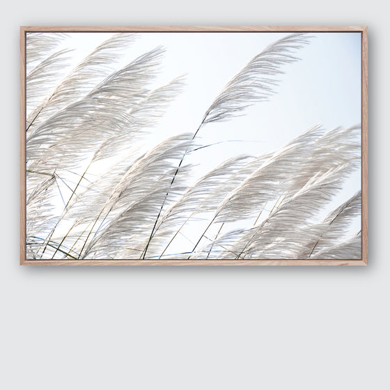 Pampas Breeze 1 Canvas Print | Beach Style Interior Wall Art