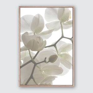 Orchid Light 3 Canvas Print Photographic Floral Wall Art by Wall Style