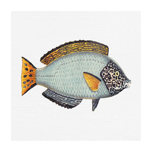 TROPICAL FISH COLLECTION #6 | Giclee fine art print