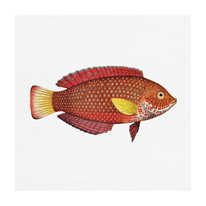 TROPICAL FISH COLLECTION #8 | Giclee, fine art print