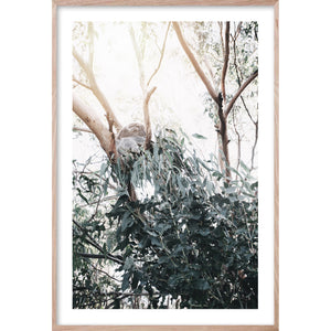 UNDER THE GUM 2 Photographic Australian Ghost Gum wall fine art print