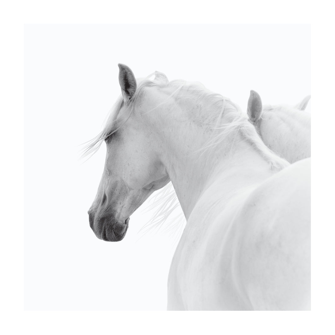 White Horse Pair Contemporary Photographic Fine Art Print Wall Style