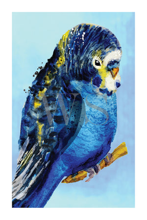 BLUE BUDGIE #2  Framed contemporary style, hand painted bird wall art
