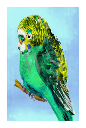GREEN BUDGIE #2 * Contemporary, hand painted, fine art print