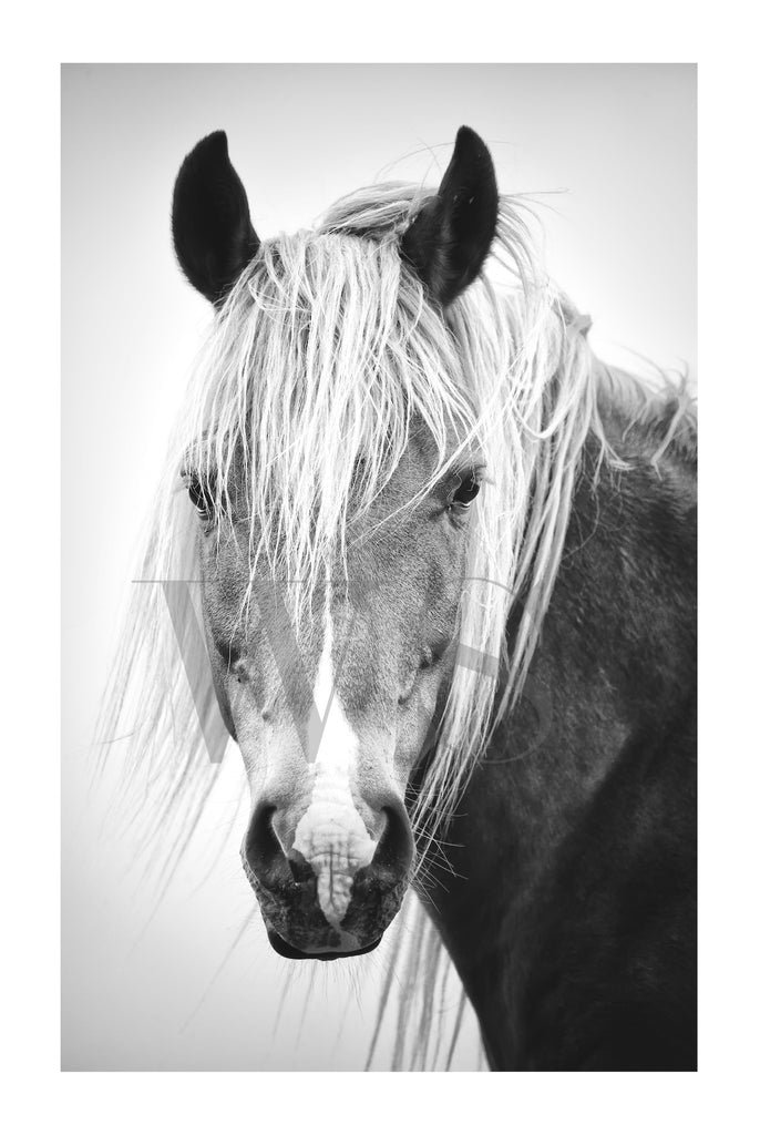 HORSE BEAUTY #2 * Contemporary, photographic, fine art print