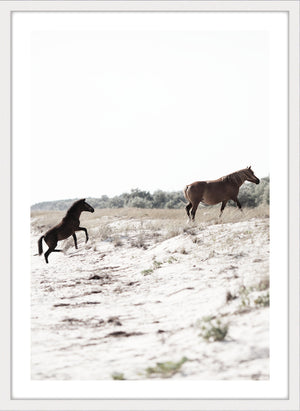 RUN FREE #2 *  Photographic fine art horse print.