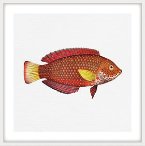 TROPICAL FISH COLLECTION #8 | Framed giclee, fine art print | White Matt