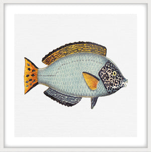 TROPICAL FISH COLLECTION #6 | Framed, giclee fine art print | Matt White