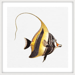 TROPICAL FISH COLLECTION #7 | Giclee, fine art,interior wall print | White