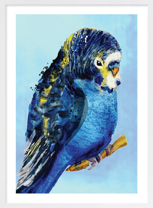 Blue Budgie #1