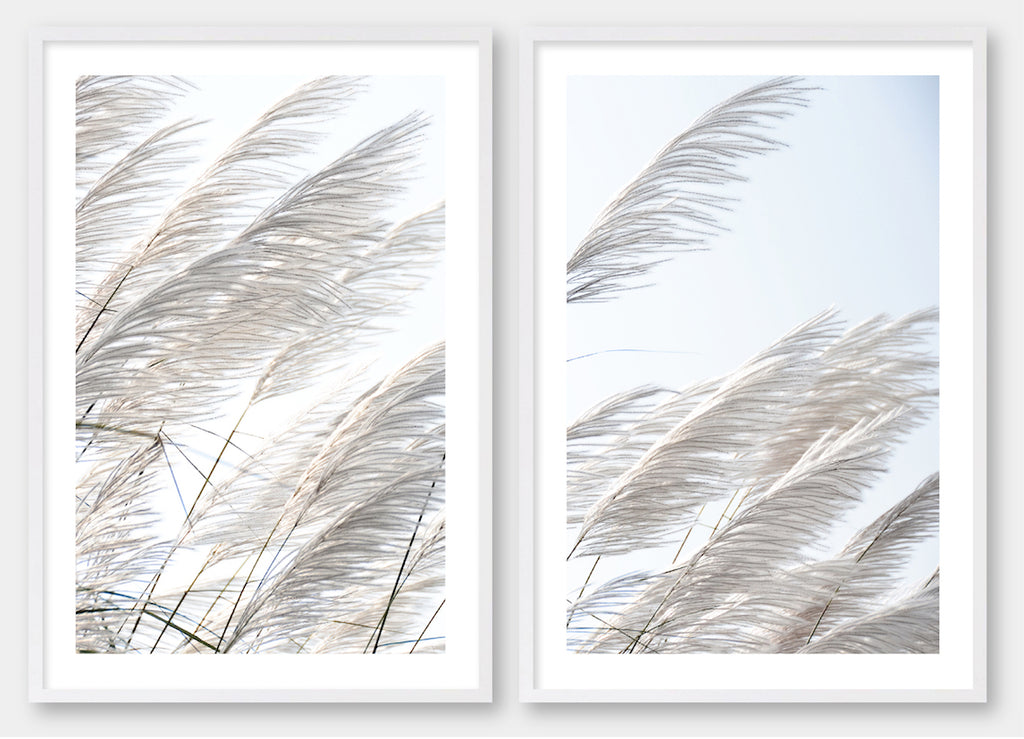 Pampas Breeze #3 & #4 Pair