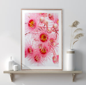 Harmony #1  Original Dahlia photographic floral interior wall art