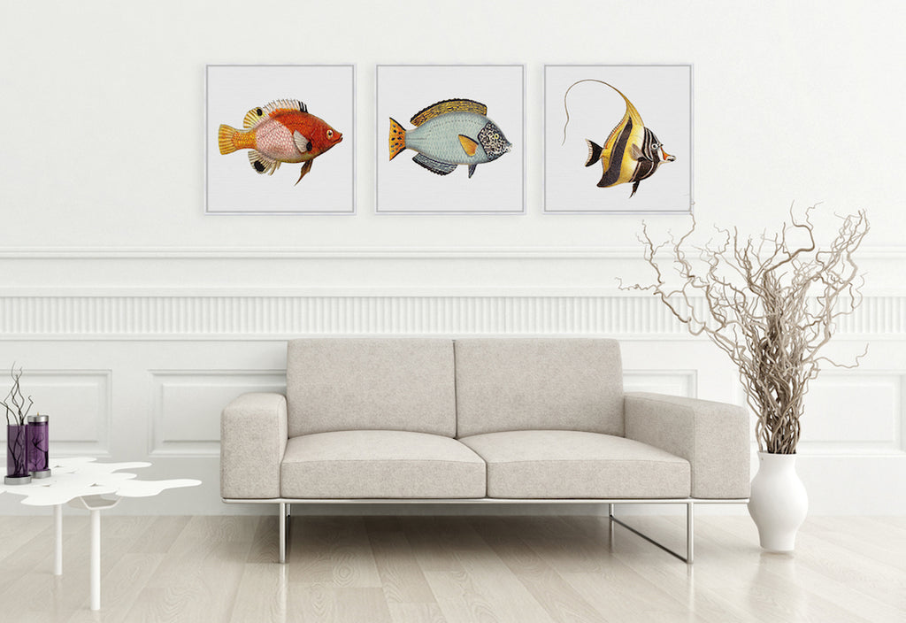 Tropical Fish Collection #8 Canvas