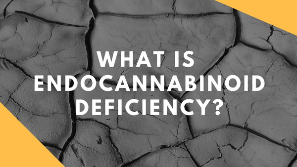 Supporting the System: What is Endocannabinoid Deficiency?