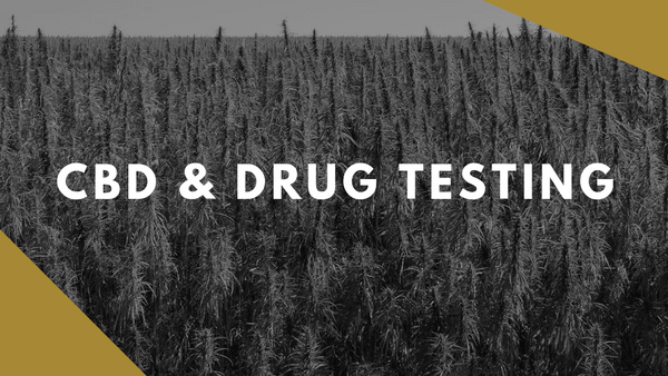 CBD & Drug Testing: Can HEMP CBD cause me to fail?