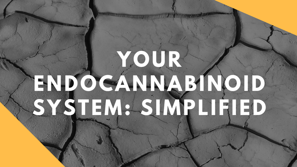 Your Endocannabinoid System: Simplified