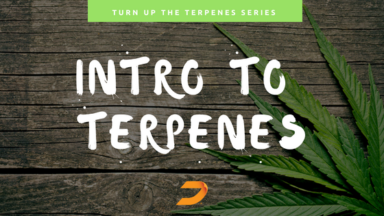 Turn Up The Terpenes | An informational series