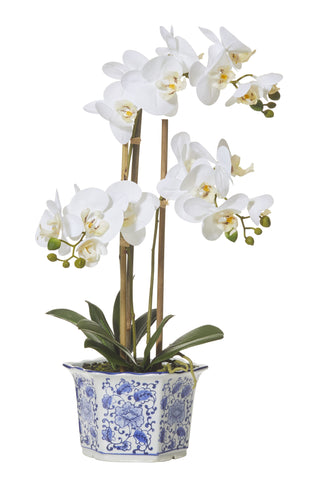 "Rogue Artificial Flower Arrangement ""Butterfly Orchid w Chinoiserie Pot"" 60cm H"