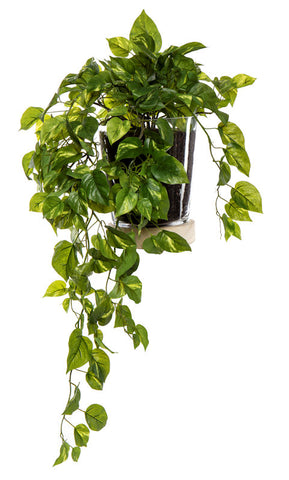 "Rogue Artificial Plant ""Pothos Hanging-Skylar Vase"" 82 cm"