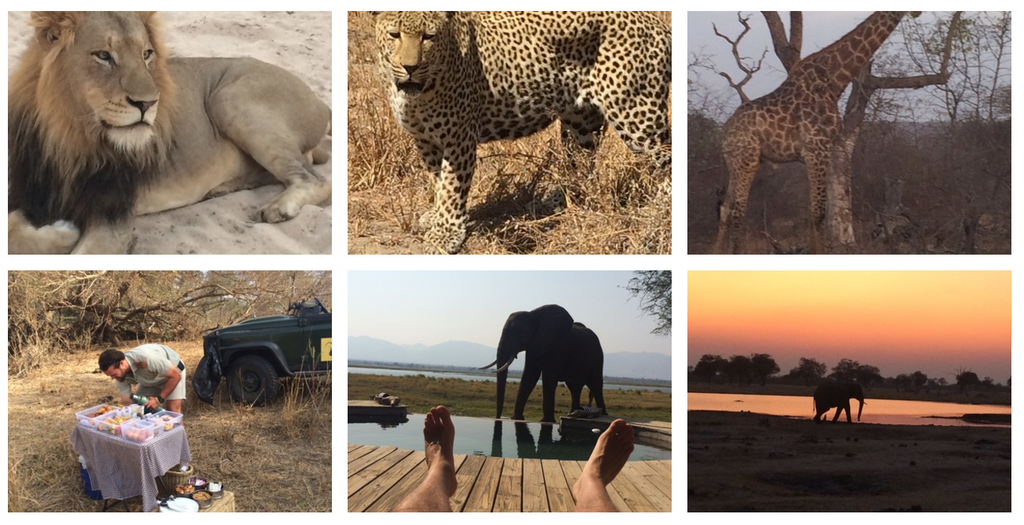 Eat.Safari. Eat. Safari. Eat. Sleep. Repeat.