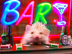 "Experience a New Night Spot at ""Hedgehog BAR"" in Shibuya!"