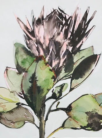 King Protea - surfaced