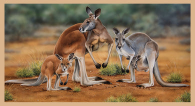 Wildlife Art - Kangaroos