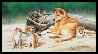 Wildlife Art - Dingoes