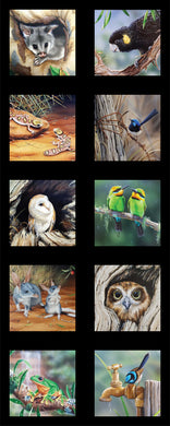 Wildlife Art V5 - Aussie Animals - DV3708