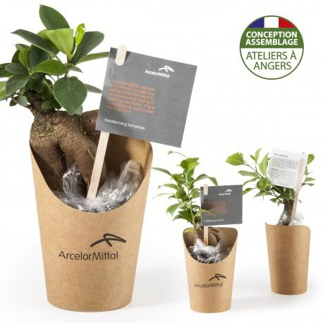 Bonsai en pot carton