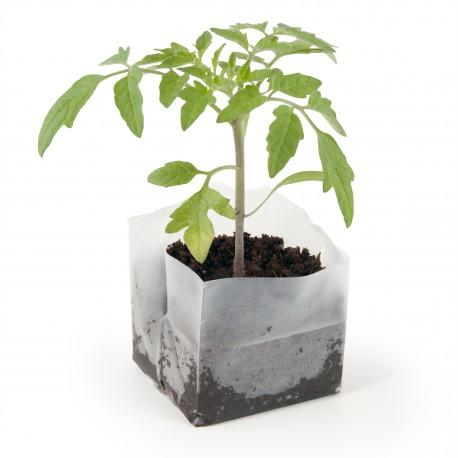 Carré coco 10x10 cm Tomate - Kit de plantation