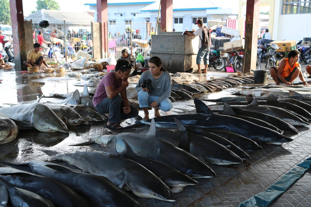 Shark carcasses at the market, killed for their fins for the food trade in Asia - as depicted in environmental documentary Blue