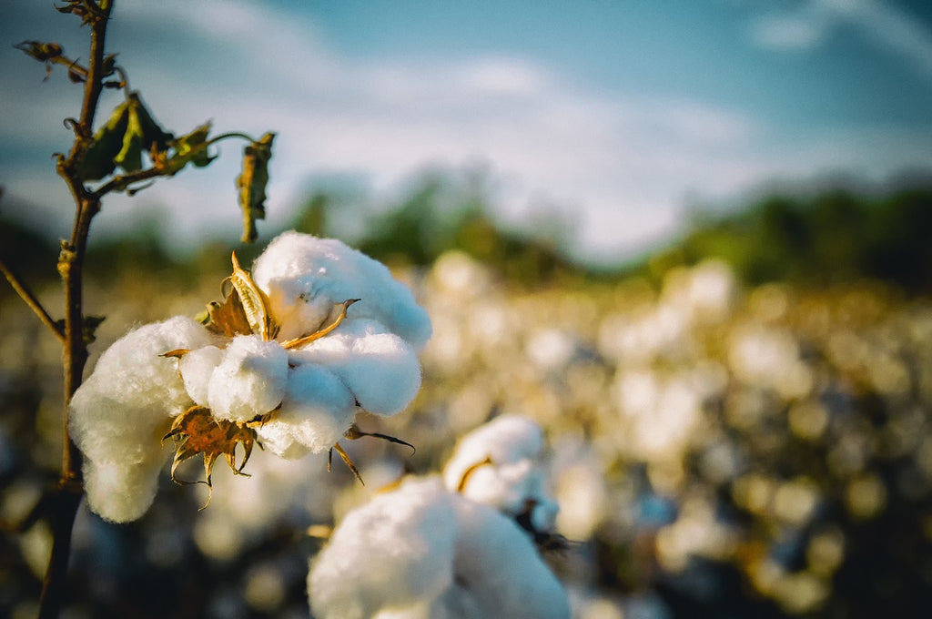 choose organic cotton which has less impact on people and the environment