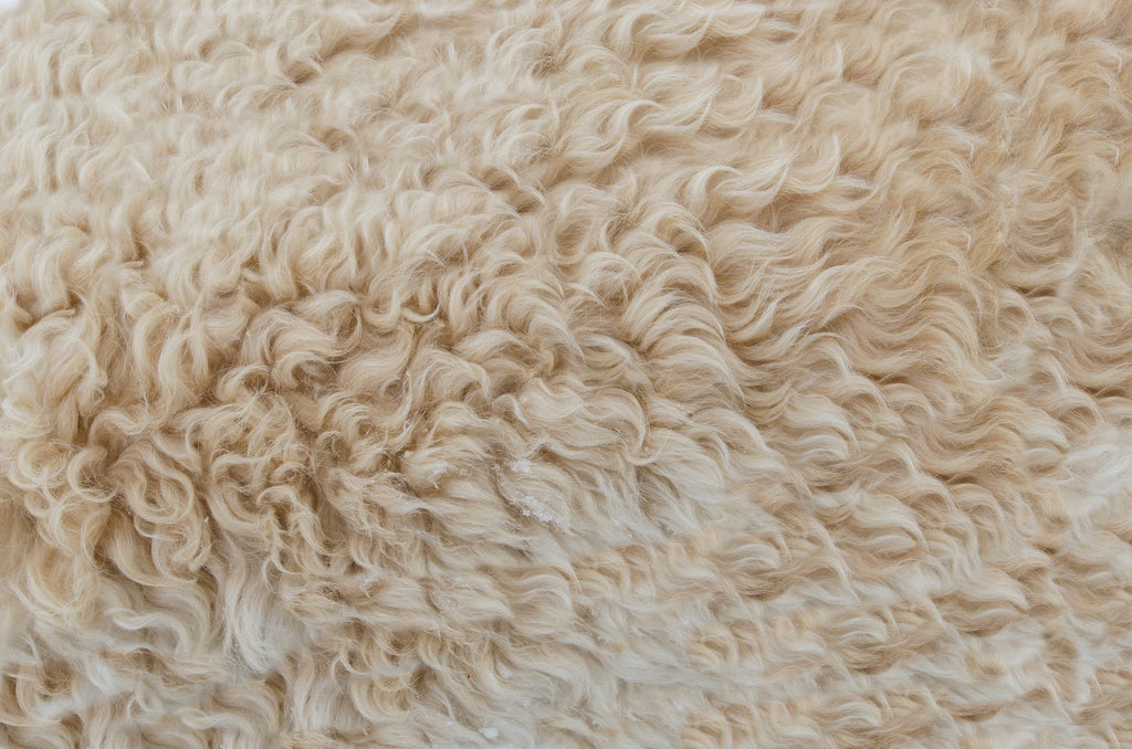 Image of wool to accompany article on sustainable fibers on ZERRIN