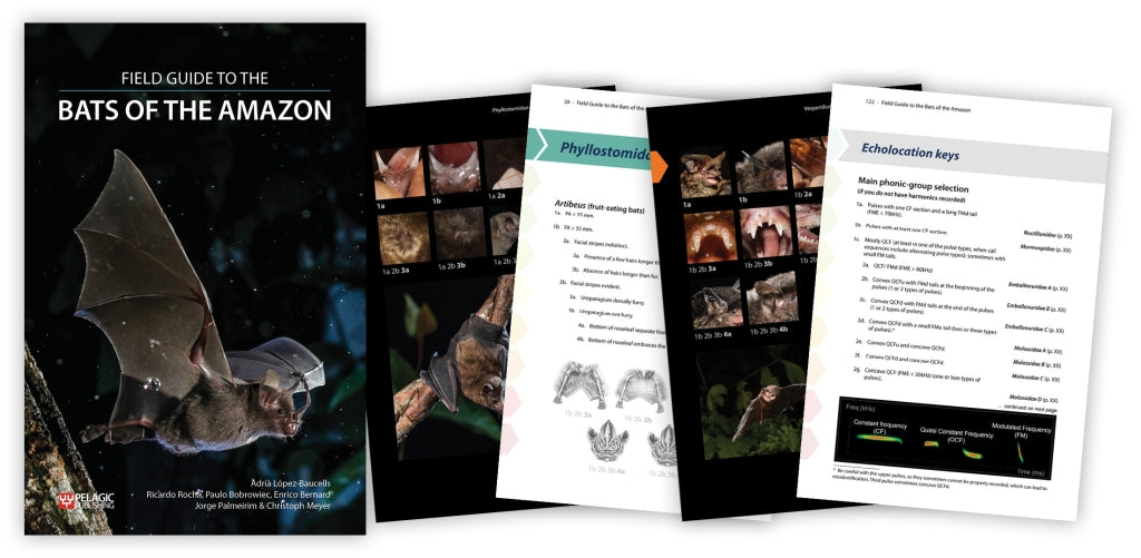 Pre-publication offer on the Field Guide to the Bats of the Amazon