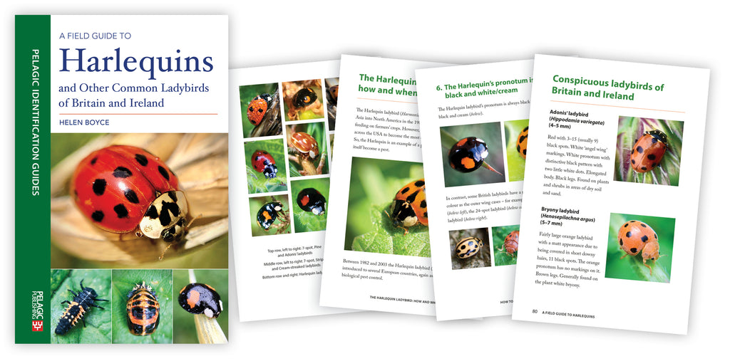 In Conversation with Helen Boyce, author of A Field Guide to Harlequins and Other Common Ladybirds of Britain and Ireland