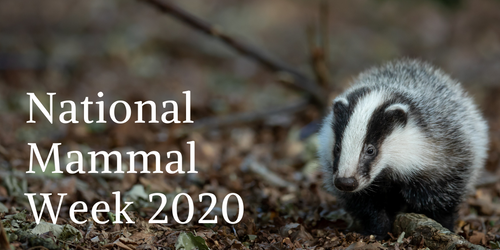 Celebrating National Mammal Week 2020 with 30% off Mammal Books