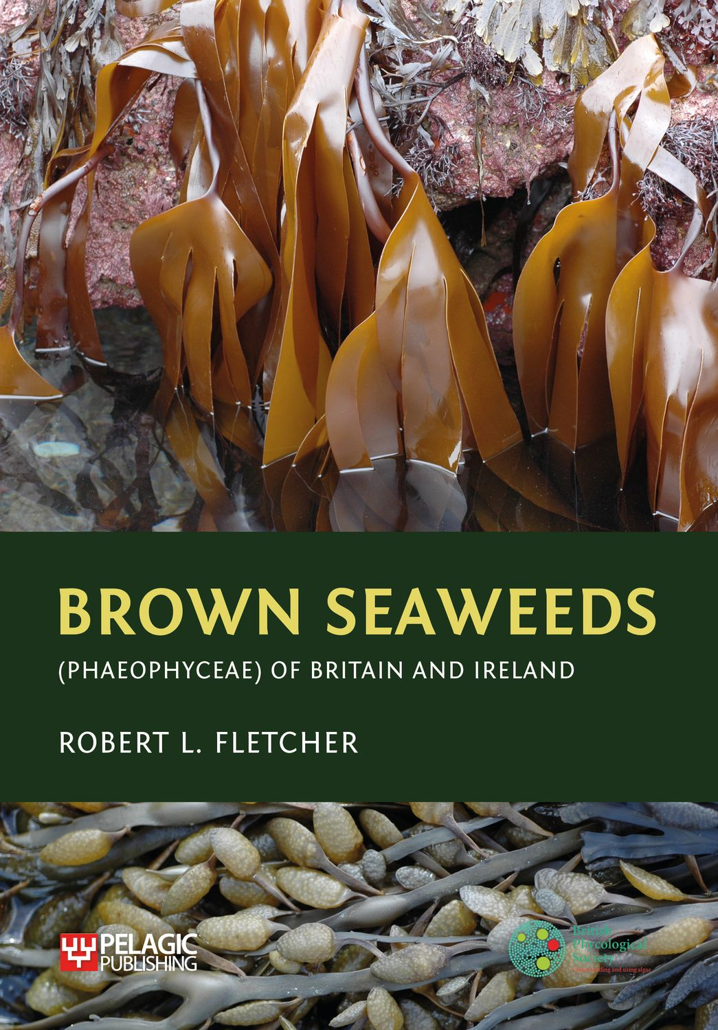 Brown Seaweeds (Phaeophyceae) of Britain and Ireland - Pelagic Publishing