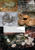 Amphibians and reptiles - Pelagic Publishing