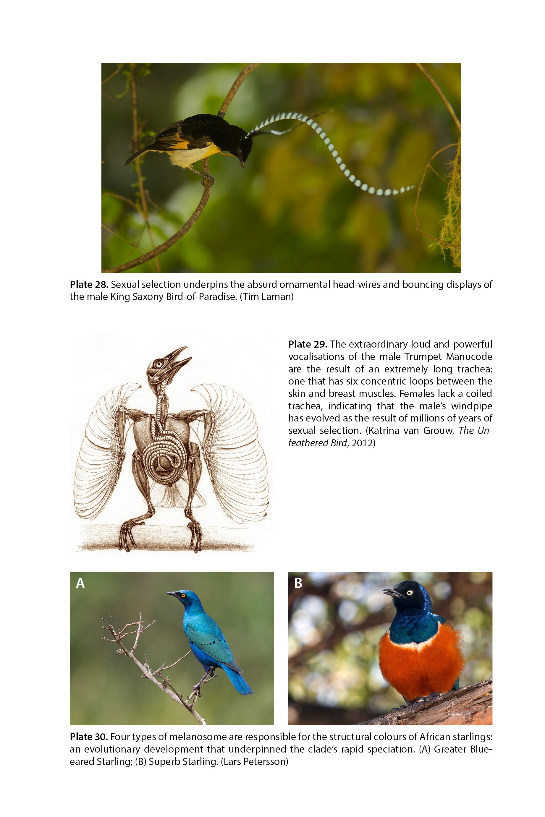 Birds: a selection of articles