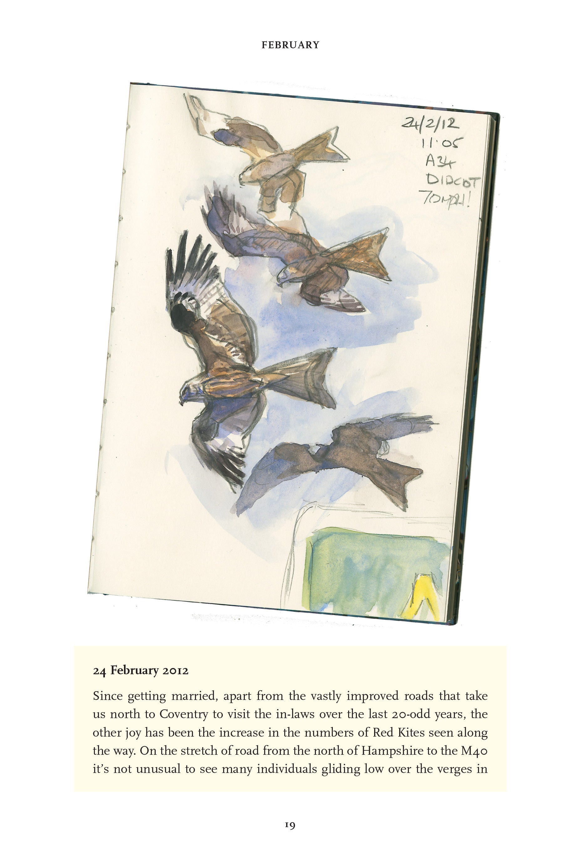 The Red Kite's Year