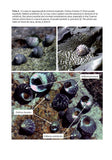 Snails on rocky sea shores - Pelagic Publishing