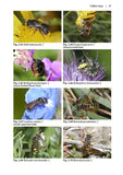 Solitary bees - Pelagic Publishing